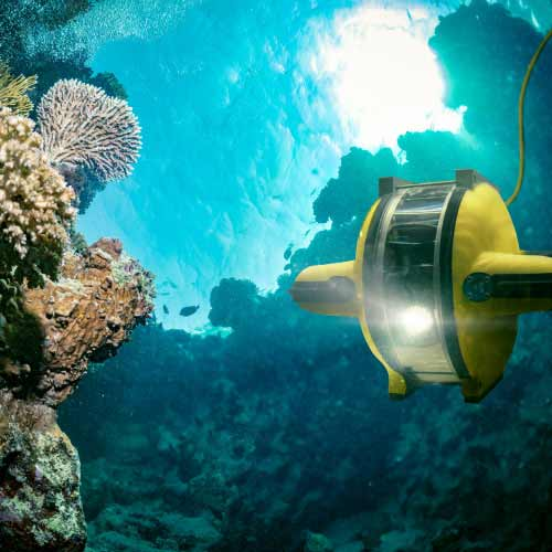 Raise the reef: AI helps power coral reef restoration