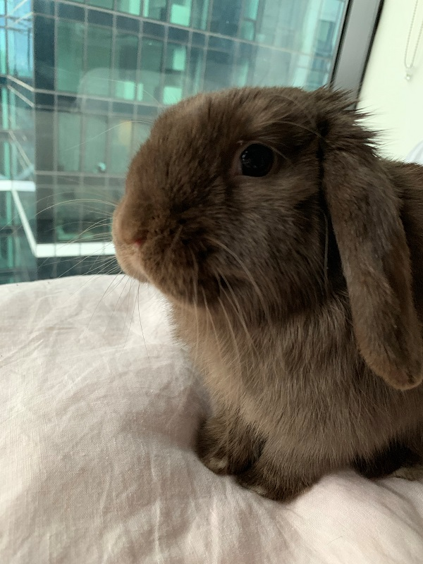 My pet bunny, Monty – just because I love him