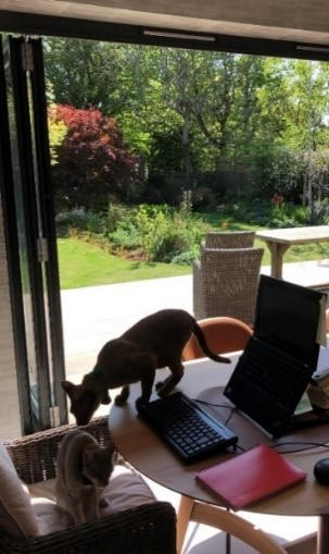 Work from home setting with some furry friends