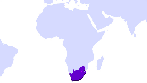 South Africa local consultancies